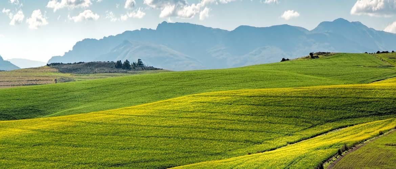 Что такое земли сельскохозяйственного назначения